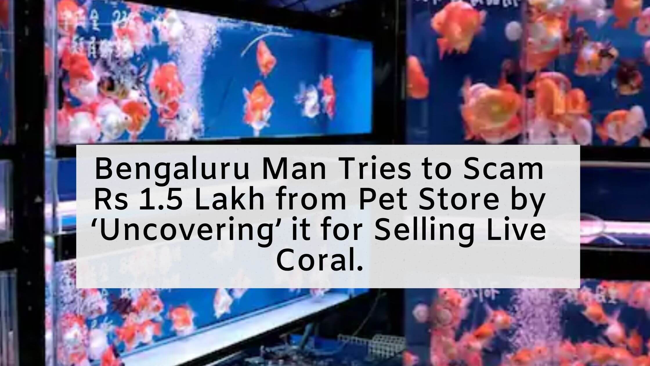 Bengaluru Man Tries to Scam Rs 1.5 Lakh from Pet Store by 'Uncovering' it for Selling Live Coral.