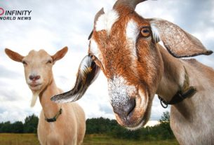 For Securing Irrigation Waters Ranchers, Bribe Arizona City Official with Goat