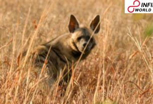 Five held for 'pounding the life out of hyena' in Ahmedabad town