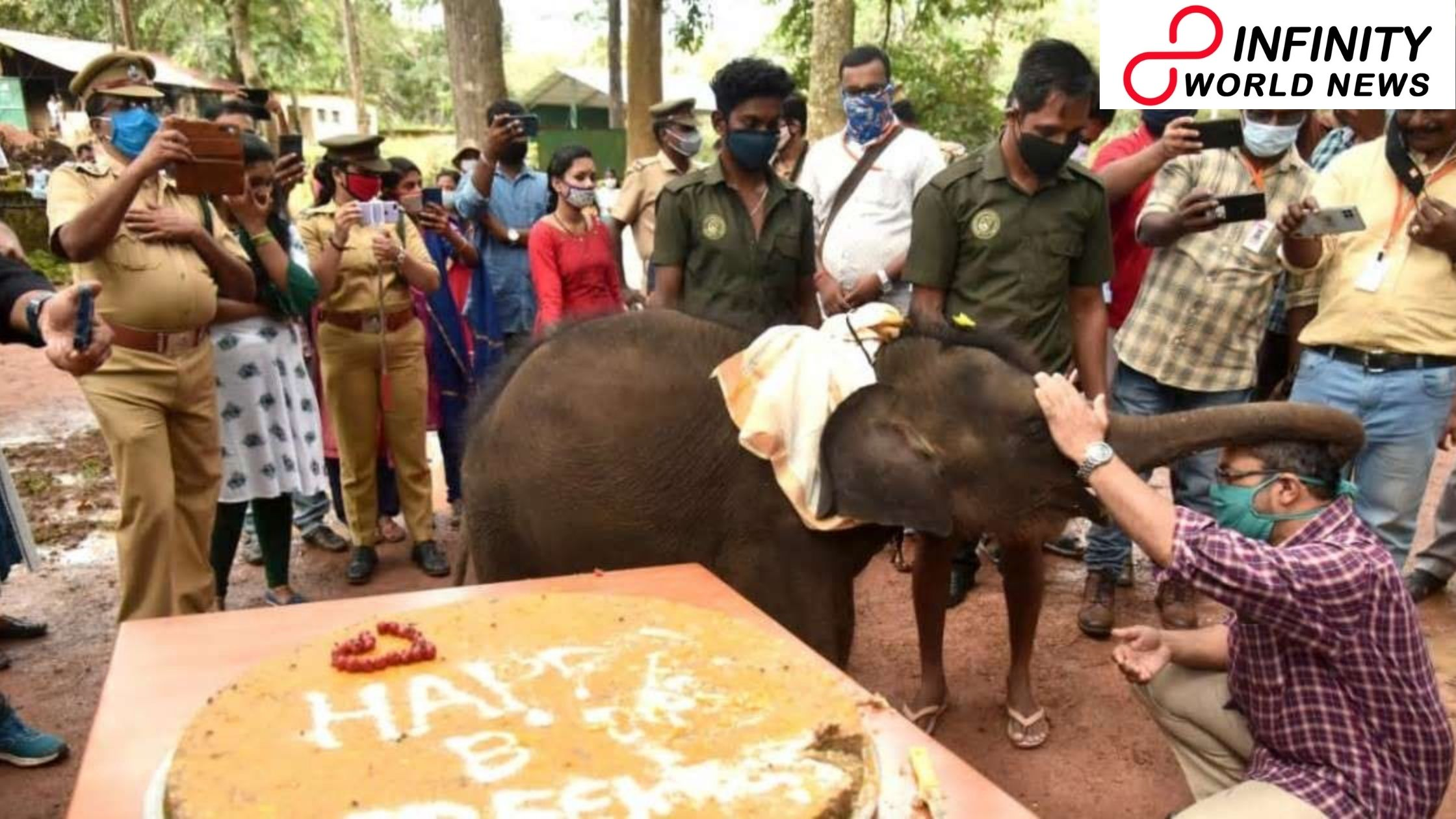 Little Elephant Gets Birthday Surprise with Sugarcane and Jaggery Cake in Kerala