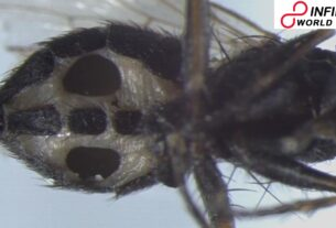 Two newfound types of fungi transform flies into zombies