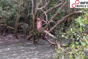 Stripped outlaw saved from mangroves by Australian anglers