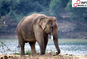 Elephant Kills Man Attempting To Take Selfie In Chhattisgarh