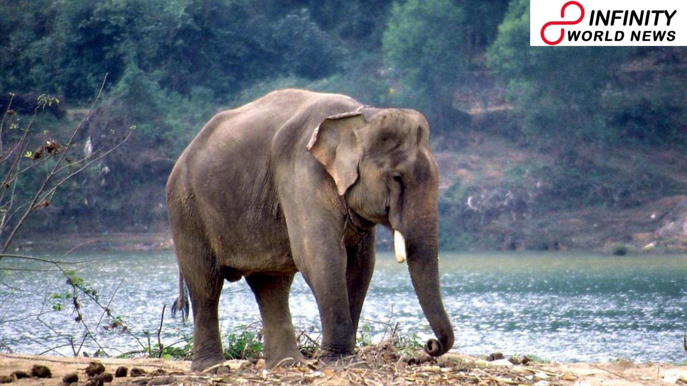 Elephant Kills Man Attempting To Take Selfie In Chhattisgarh