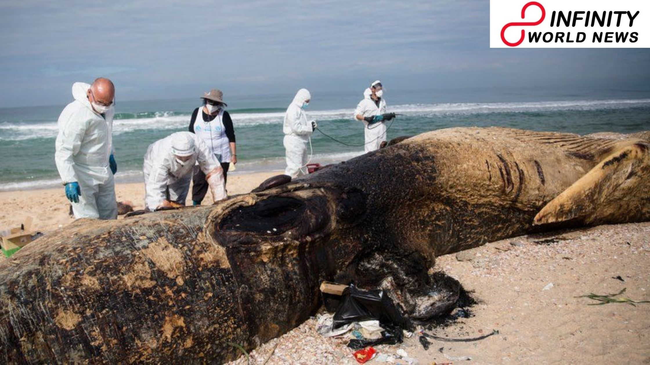 Israel contamination: Tar globs distort coast after an oil slick