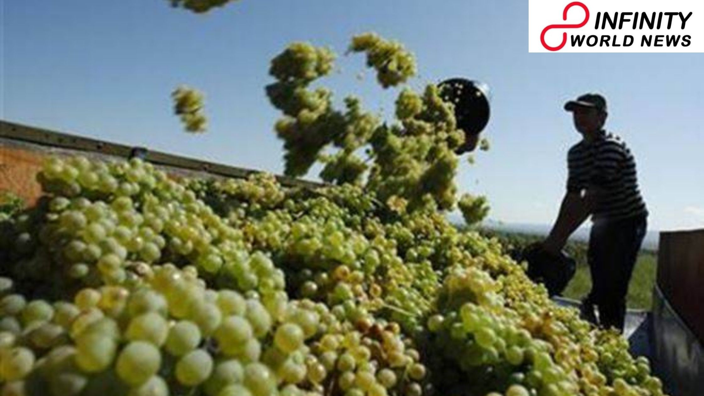 Making weather data effectively accessible for grape farmers
