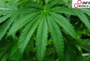 Marijuana Policies in the U.S. Could Soon be Dictated by Potency of the Pot