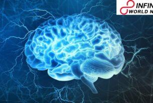 Modern Human Brain Began 1.7 Million Years Ago in Africa, New Study Reveals